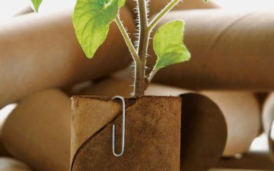 Un crayon qui devient une plante ! Comment ça ?